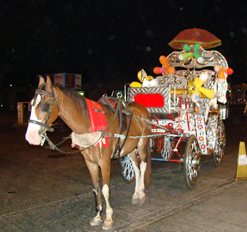 Arabic horses and carriages ply their trade